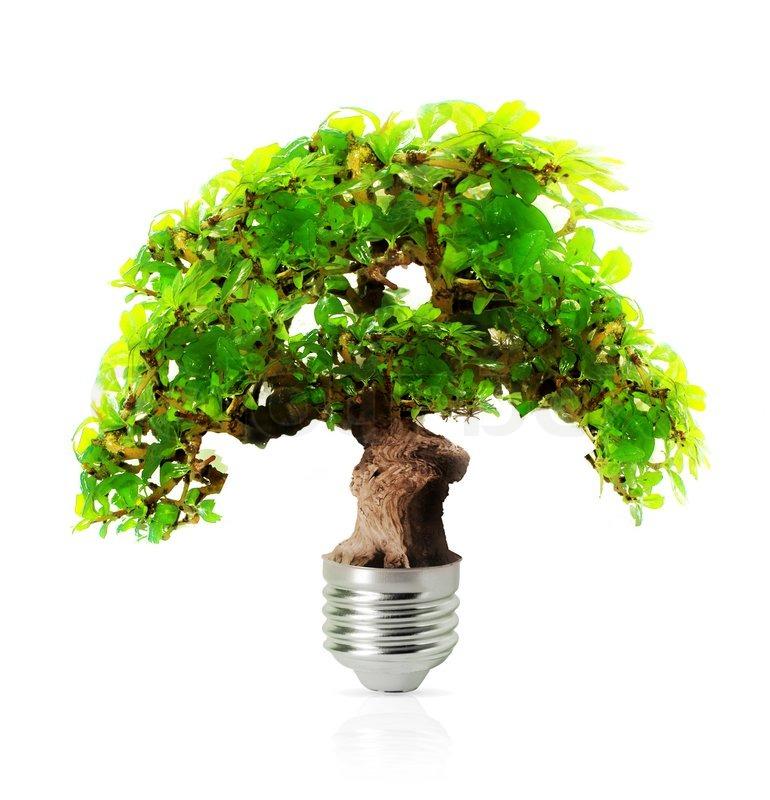 Becurile economice in prietenie cu mediul