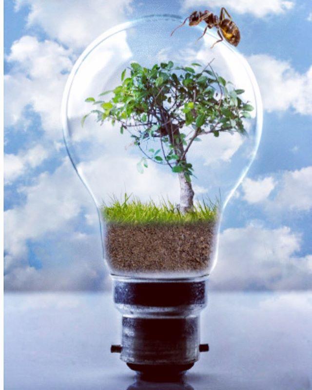 Becuri LED pentru o locuinta prietenoasa cu mediul inconjurator